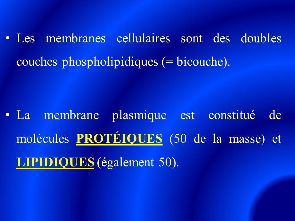 Les membranes cellulaires sont des doubles couches phospholipidiques (= bicouche). La membrane plasmique est constitué de molécules PROTÉIQUES (50 de