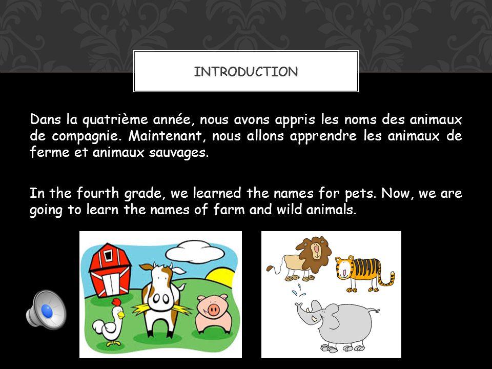 Dans la quatrième année, nous avons appris les noms des animaux de compagnie.