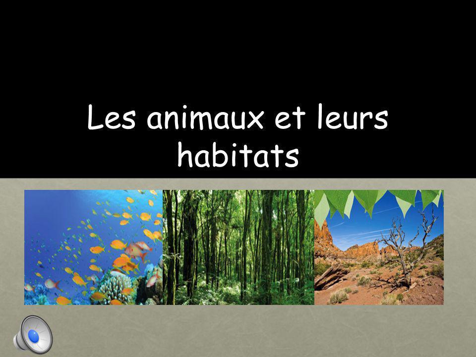 Les animaux et leurs habitats
