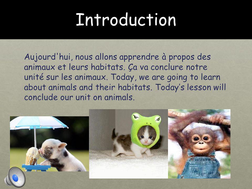Introduction Aujourd hui, nous allons apprendre à propos des animaux et leurs habitats.