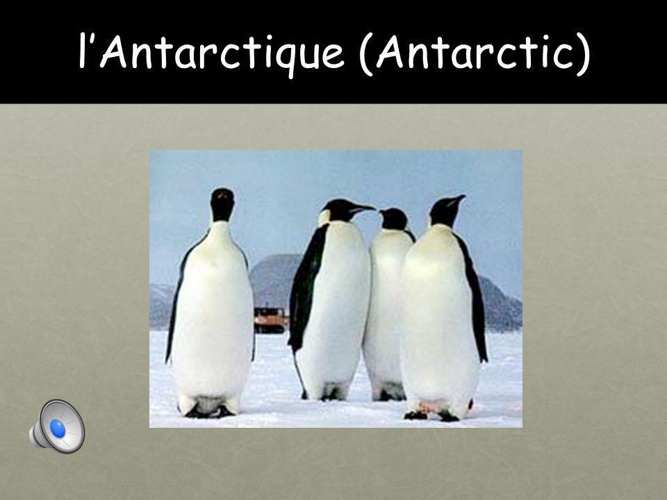 Introduction Aujourd'hui, nous allons apprendre à propos des animaux et leurs habitats. Ça va conclure notre unité sur les animaux. Today, we are goin