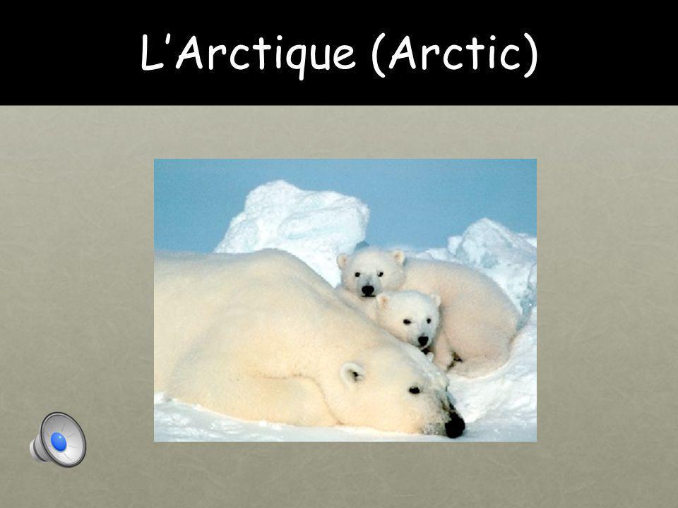 Révision l'Antarctique/ l'Arctique La toundra Les montagnes La forêt La jungle Le désert La savane L océan Le mer La ferme