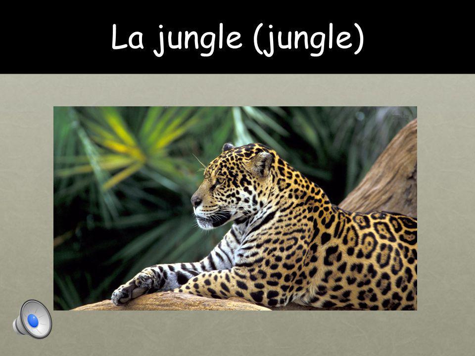 La jungle (jungle)