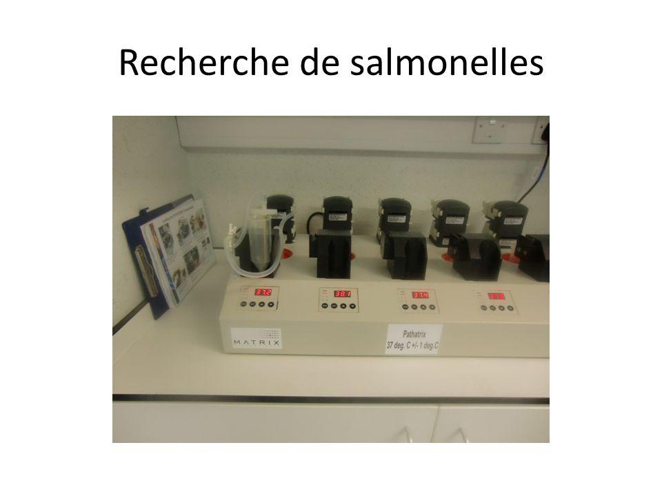 Recherche de salmonelles