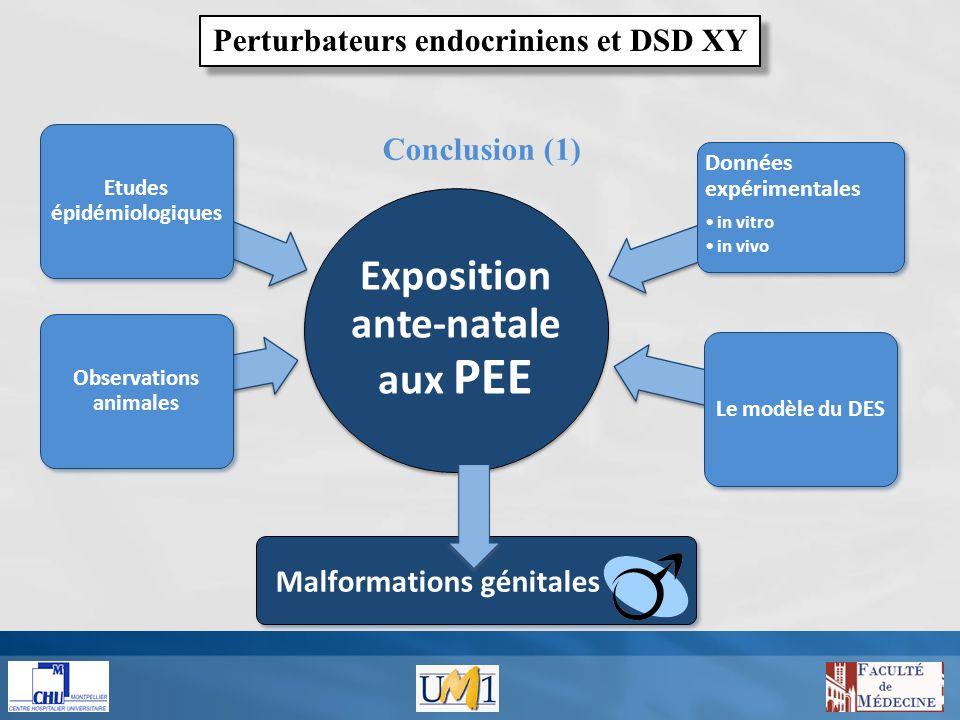 Conclusion (2) Attendre d en savoir assez pour agir en toute lumière, c est se condamner à l inaction Jean Rostand Perturbateurs endocriniens et DSD XY