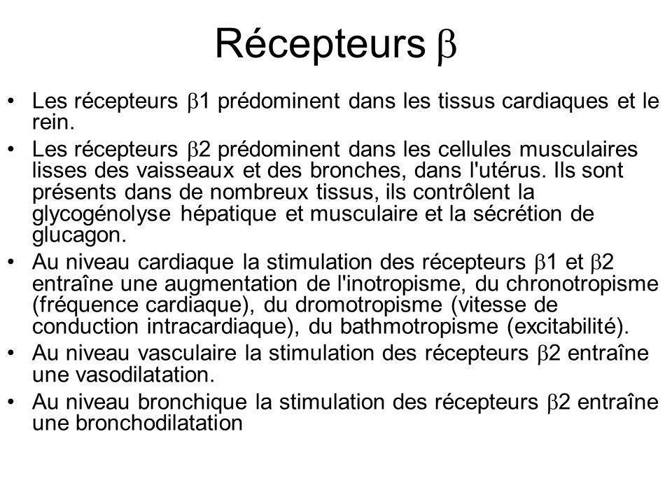 Récepteurs  Les récepteurs  1 prédominent dans les tissus cardiaques et le rein. Les récepteurs  2 prédominent dans les cellules musculaires lisses