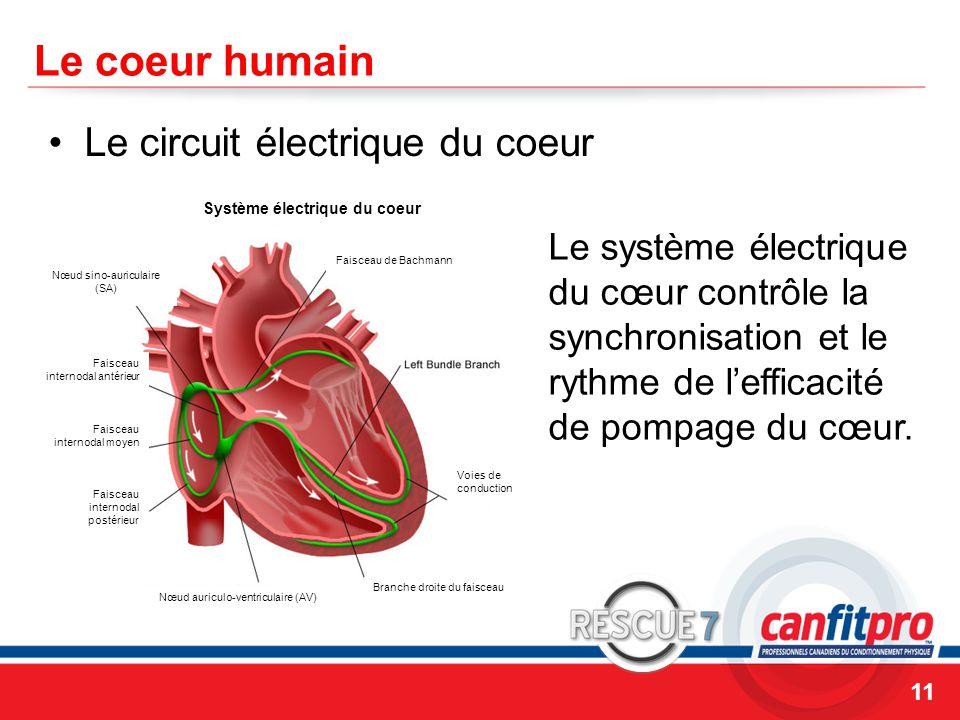 CPR Course Level 1 Le coeur humain Le circuit électrique du coeur 11 Le système électrique du cœur contrôle la synchronisation et le rythme de l'efficacité de pompage du cœur.