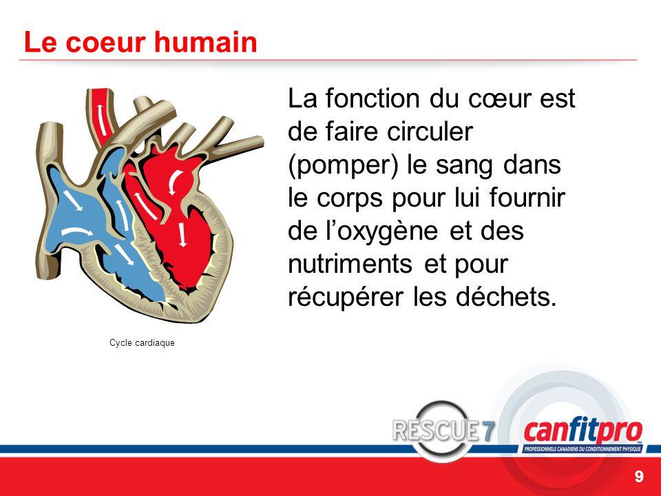 CPR Course Level 1 Le coeur humain La fonction du cœur est de faire circuler (pomper) le sang dans le corps pour lui fournir de l'oxygène et des nutriments et pour récupérer les déchets.