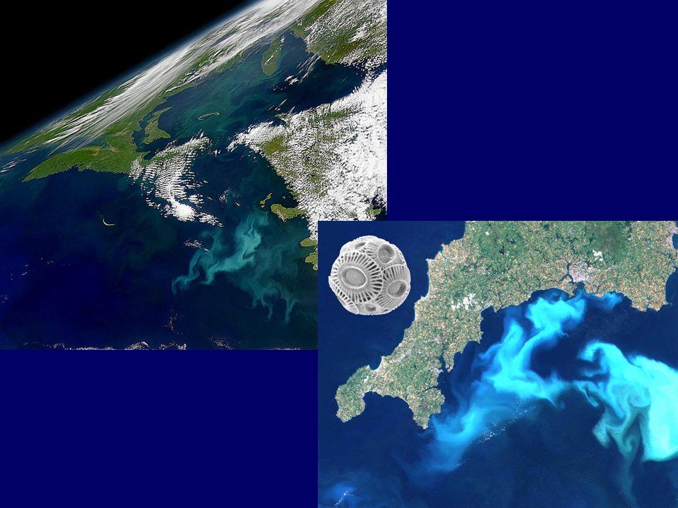 Intégration au sein de l'UMR 7127, Station Biologique de Roscoff Equipe PLANCTON OCEANIQUE (responsable: Daniel Vaulot):