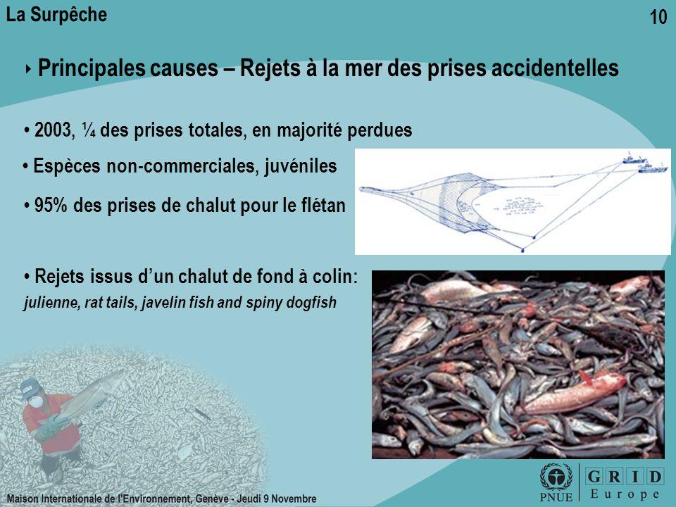10 ‣ Principales causes – Rejets à la mer des prises accidentelles 2003, ¼ des prises totales, en majorité perdues Espèces non-commerciales, juvéniles