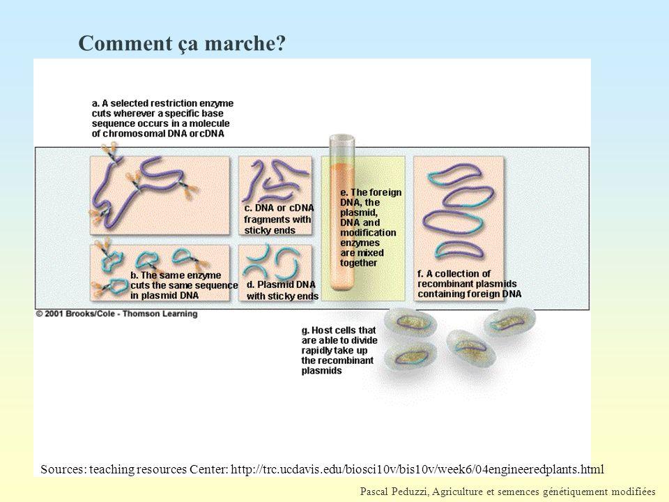 Pascal Peduzzi, Agriculture et semences génétiquement modifiées Antibiotique Comment ça marche?