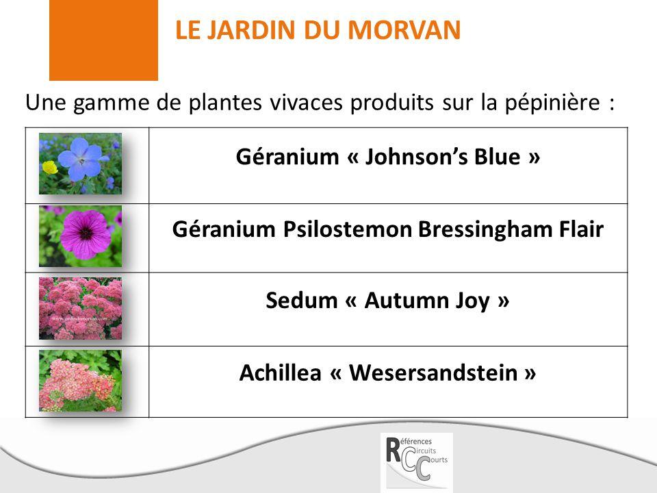 LE JARDIN DU MORVAN Une gamme de plantes vivaces produits sur la pépinière : Géranium « Johnson's Blue » Géranium Psilostemon Bressingham Flair Sedum
