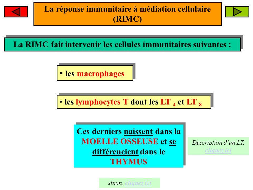 La dynamique de la RIMC Macrophage Virus 1- Le virus subit la PHAGOCYTOSE 1- Le virus subit la PHAGOCYTOSE 2- Certains fragments du virus, appelés EPITOPES, sont présentés à la surface membranaire du macrophage 2- Certains fragments du virus, appelés EPITOPES, sont présentés à la surface membranaire du macrophage Le macrophage est une C.P.A (Cellule Présentant l'Antigène) La phagocytose est le prélude indispensable à la suite des événements.