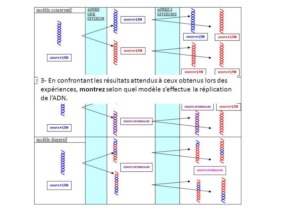 3- En confrontant les résultats attendus à ceux obtenus lors des expériences, montrez selon quel modèle s'effectue la réplication de l'ADN.