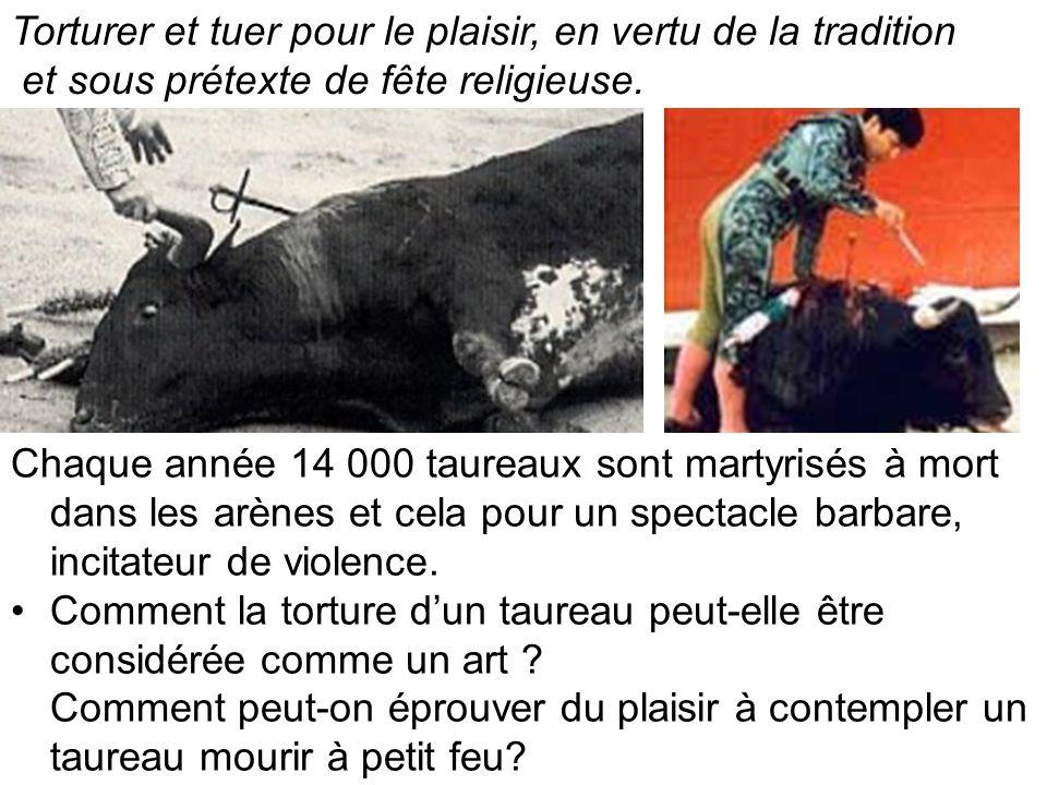 Chaque année 14 000 taureaux sont martyrisés à mort dans les arènes et cela pour un spectacle barbare, incitateur de violence.