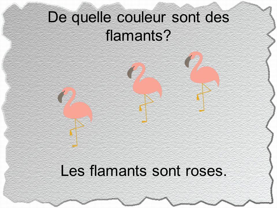 De quelle couleur sont des flamants Les flamants sont roses.