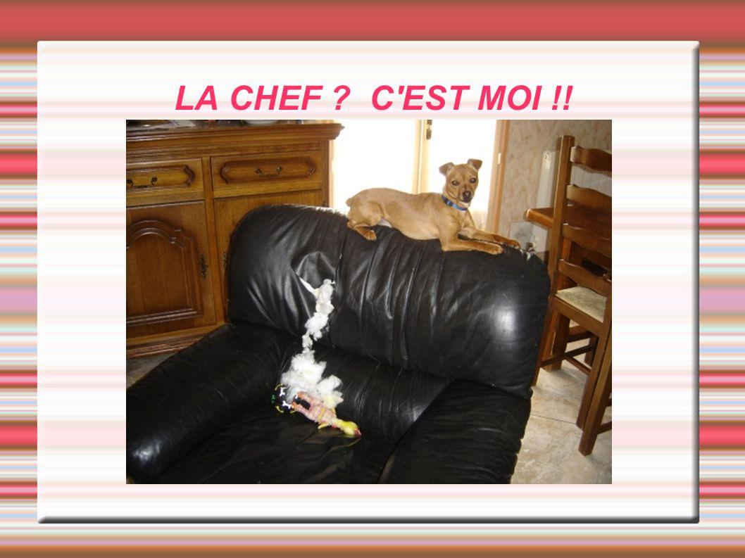 LA CHEF ? C'EST MOI !!