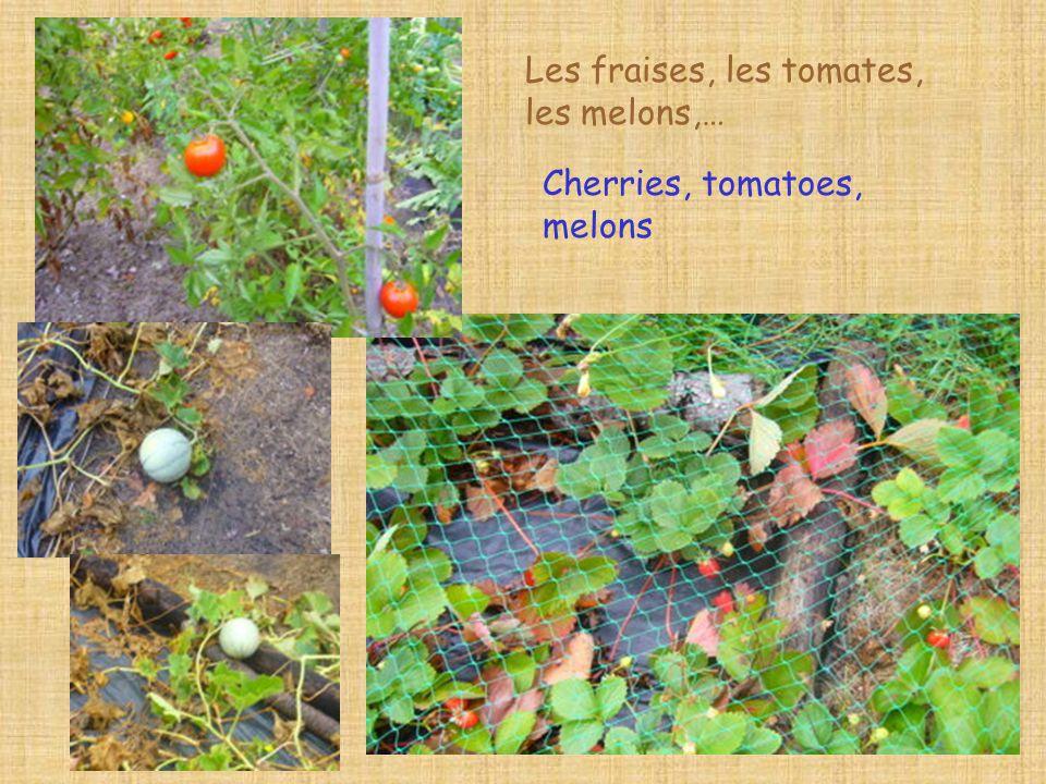 Les fraises, les tomates, les melons,… Cherries, tomatoes, melons