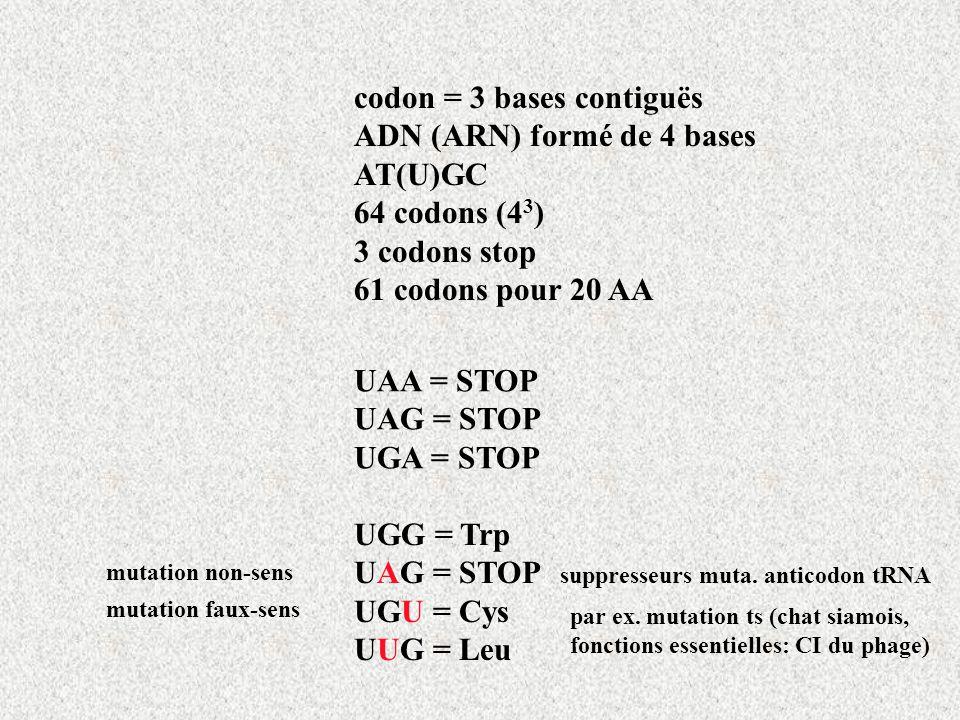 UAA = STOP UAG = STOP UGA = STOP UGG = Trp UAG = STOP UGU = Cys UUG = Leu codon = 3 bases contiguës ADN (ARN) formé de 4 bases AT(U)GC 64 codons (4 3