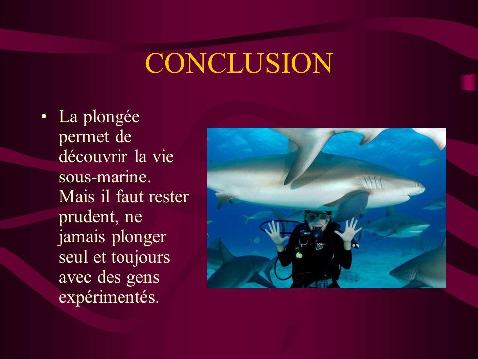 CONCLUSION La plongée permet de découvrir la vie sous-marine. Mais il faut rester prudent, ne jamais plonger seul et toujours avec des gens expériment