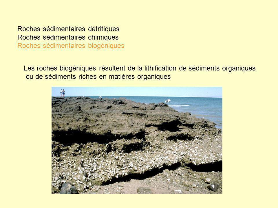 Les roches biogéniques résultent de la lithification de sédiments organiques ou de sédiments riches en matières organiques Roches sédimentaires détrit