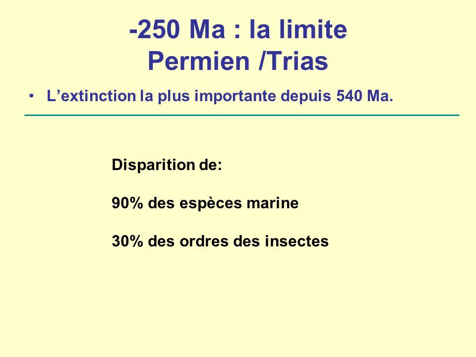 -250 Ma : la limite Permien /Trias L'extinction la plus importante depuis 540 Ma. Disparition de: 90% des espèces marine 30% des ordres des insectes