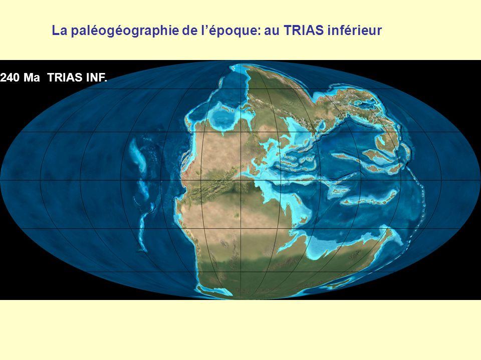 240 Ma TRIAS INF. La paléogéographie de l'époque: au TRIAS inférieur