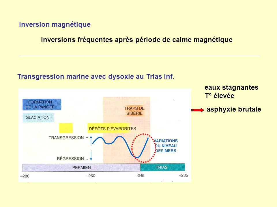 Inversion magnétique inversions fréquentes après période de calme magnétique Transgression marine avec dysoxie au Trias inf. eaux stagnantes T° élevée