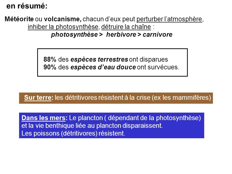 en résumé: Météorite ou volcanisme, chacun d'eux peut perturber l'atmosphère, inhiber la photosynthèse, détruire la chaîne : photosynthèse > herbivore