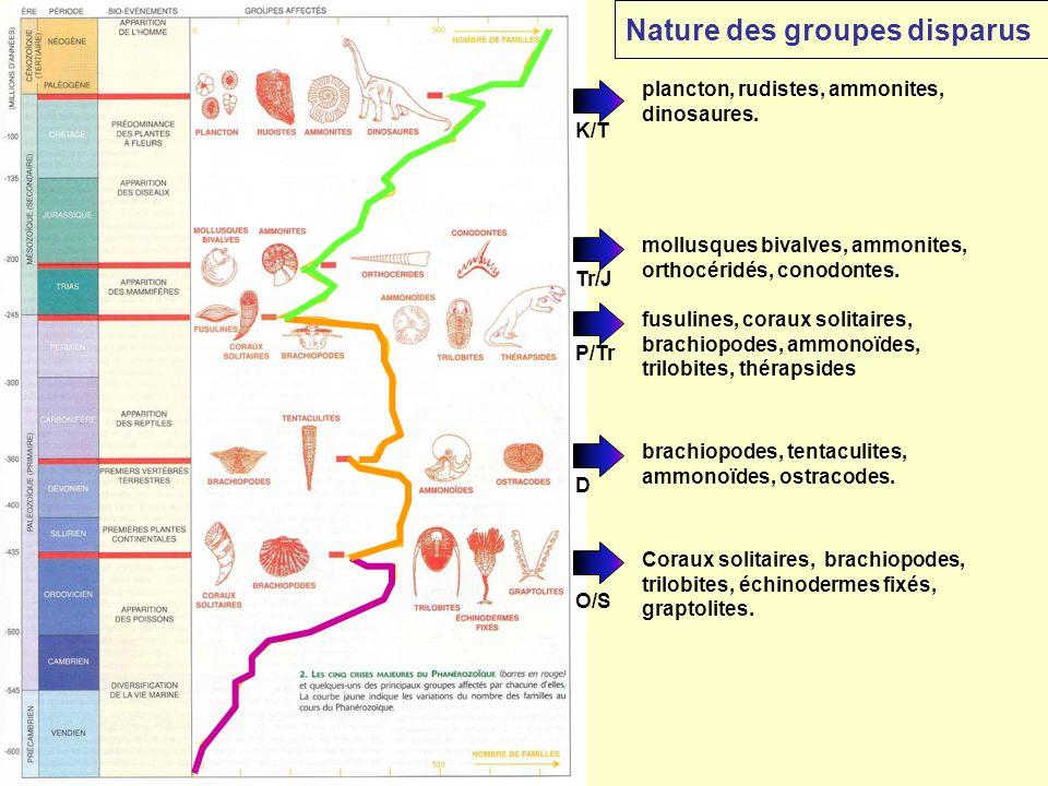 K/T Coraux solitaires, brachiopodes, trilobites, échinodermes fixés, graptolites. O/S P/Tr fusulines, coraux solitaires, brachiopodes, ammonoïdes, tri