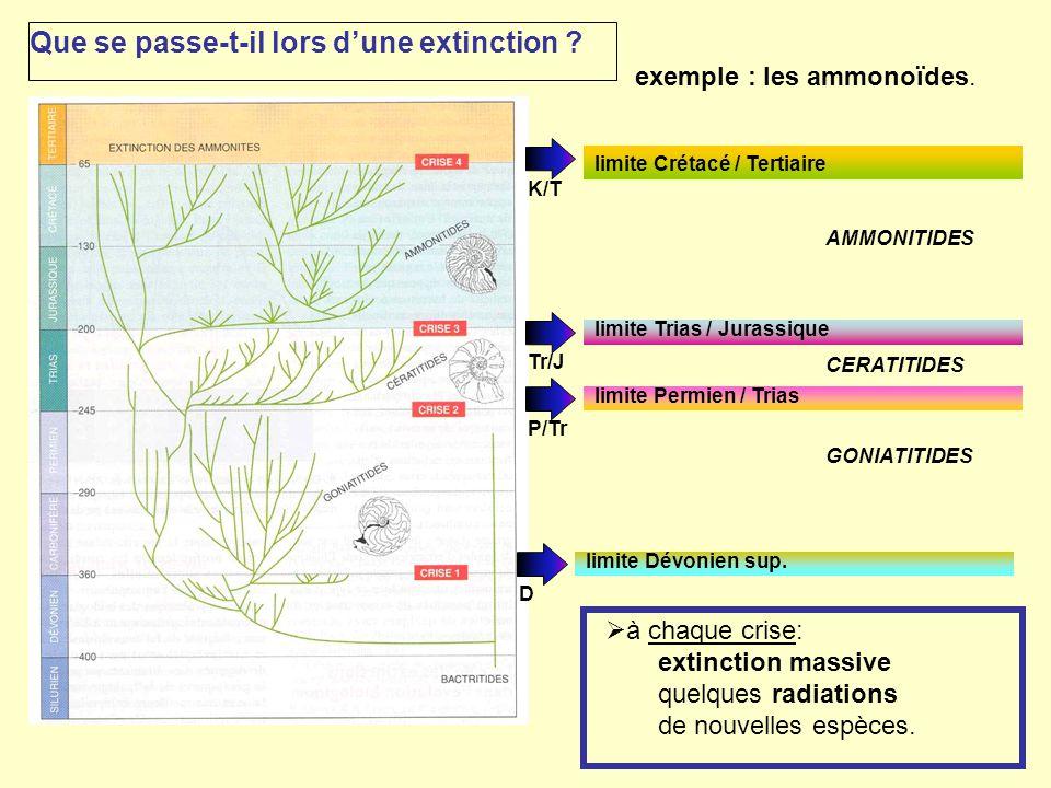 exemple : les ammonoïdes.  à chaque crise: extinction massive quelques radiations de nouvelles espèces. limite Dévonien sup. DP/Tr limite Permien / T