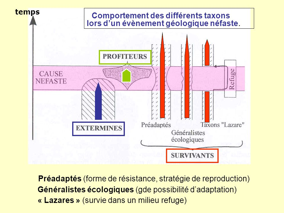 temps lors d'un évènement géologique néfaste. Préadaptés (forme de résistance, stratégie de reproduction) Généralistes écologiques (gde possibilité d'