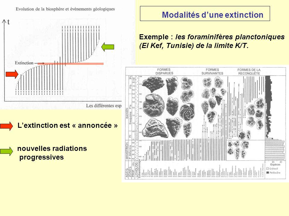 Exemple : les foraminifères planctoniques (El Kef, Tunisie) de la limite K/T. L'extinction est « annoncée » nouvelles radiations progressives Modalité