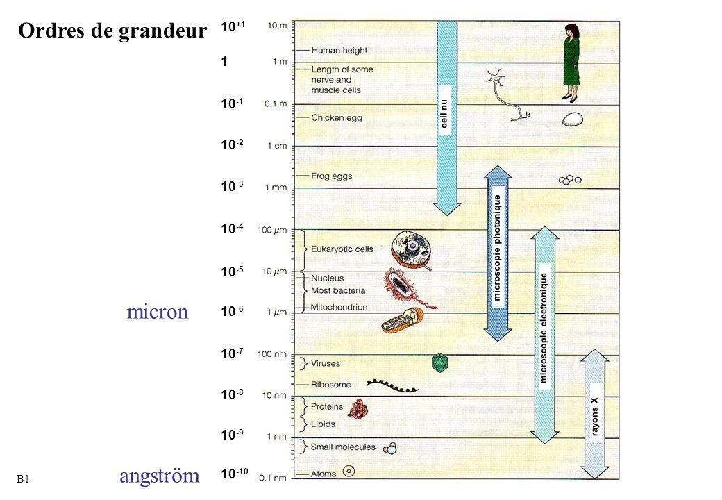 Ordres de grandeur 10-1 10-2 10-3 10-4 10-5 10-6 10-7 10-8 10-9 10-10 10+1 oeil nu microscopie photonique microscopie electronique rayons X 10 +1 1 10