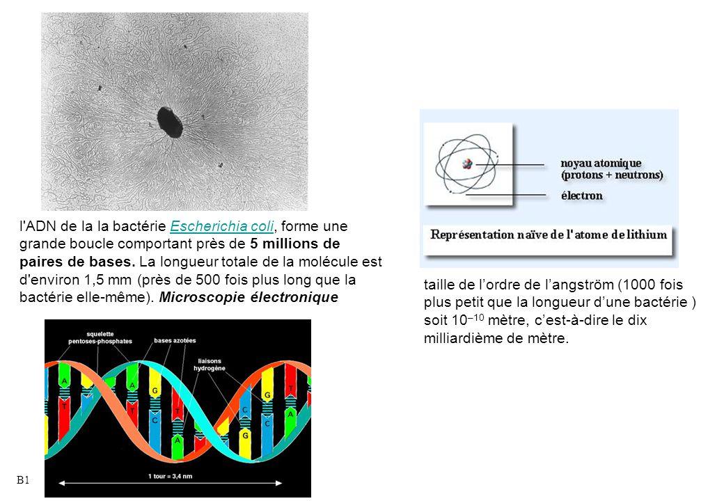 taille de l'ordre de l'angström (1000 fois plus petit que la longueur d'une bactérie ) soit 10 –10 mètre, c'est-à-dire le dix milliardième de mètre. l