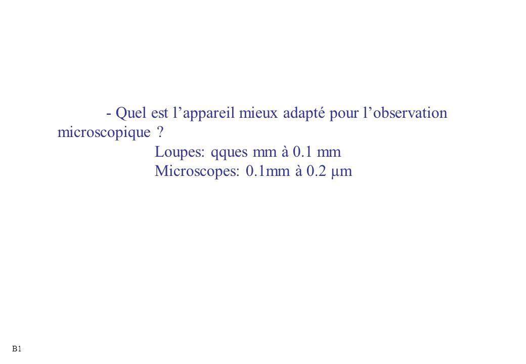 - Quel est l'appareil mieux adapté pour l'observation microscopique ? Loupes: qques mm à 0.1 mm Microscopes: 0.1mm à 0.2 µm B1