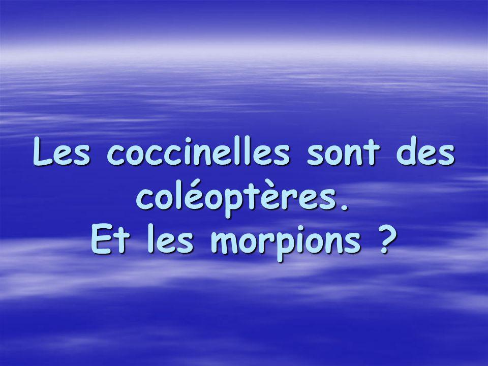 Les coccinelles sont des coléoptères. Et les morpions ?