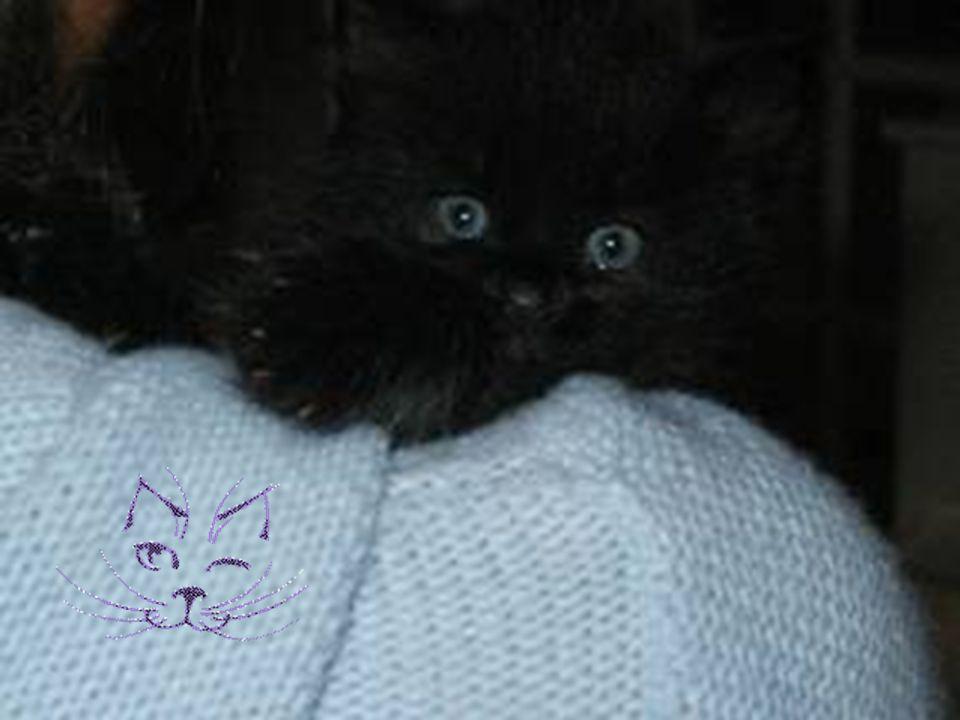 staring… Pistache 10 preuves que votre chat veut devenir Maître du Monde