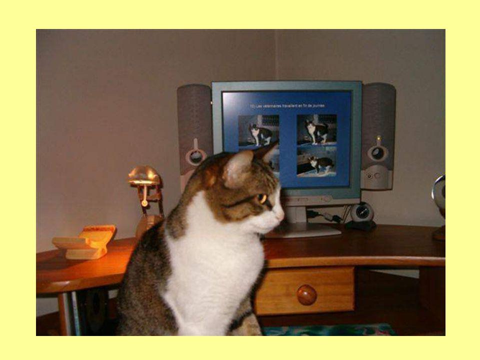 7) Votre explorer a une nouvelle page de démarrage : http://www.felin.com http://www.felin.com