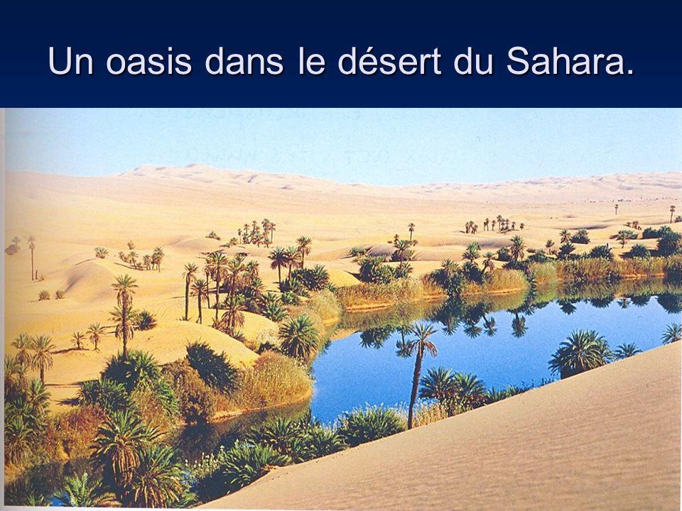 Un oasis dans le désert du Sahara.
