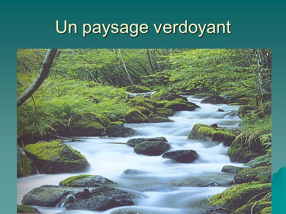 Un paysage verdoyant