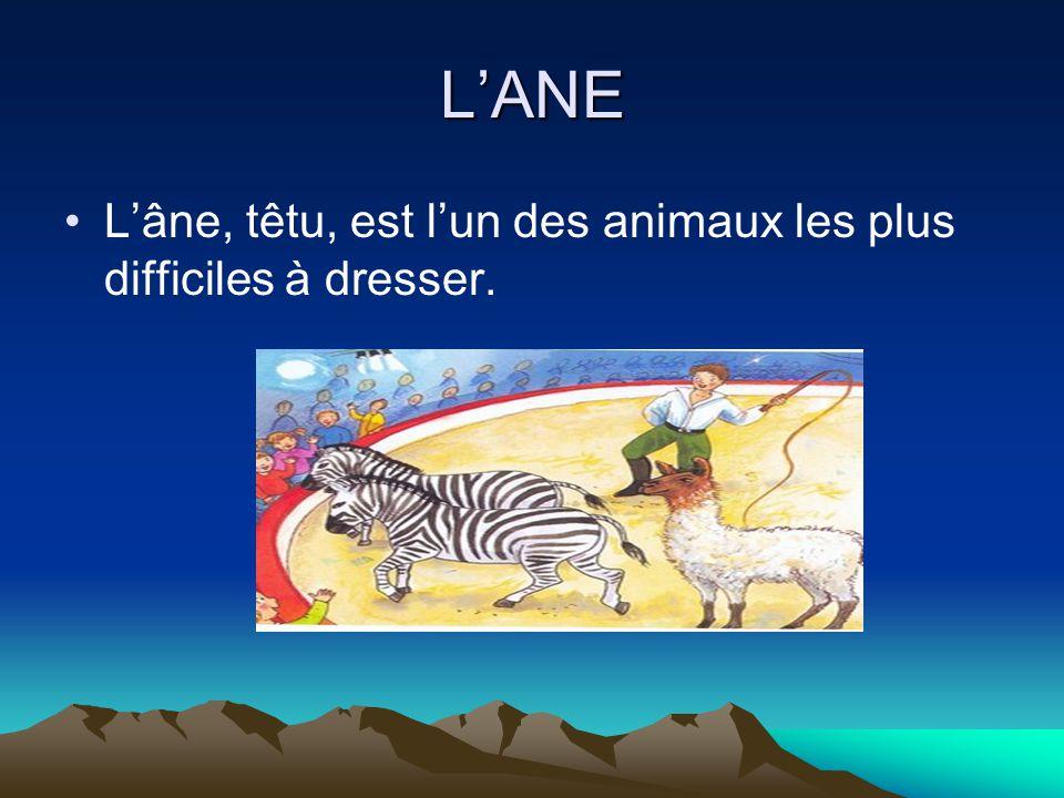 L'ANE L'âne, têtu, est l'un des animaux les plus difficiles à dresser.