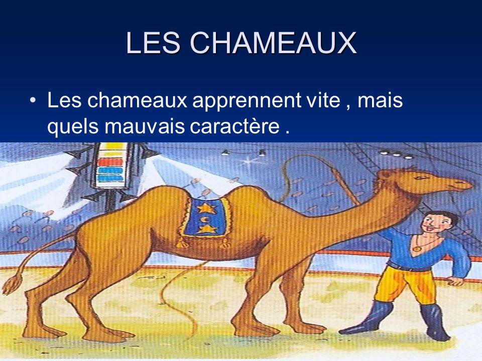 LES CHAMEAUX Les chameaux apprennent vite, mais quels mauvais caractère.