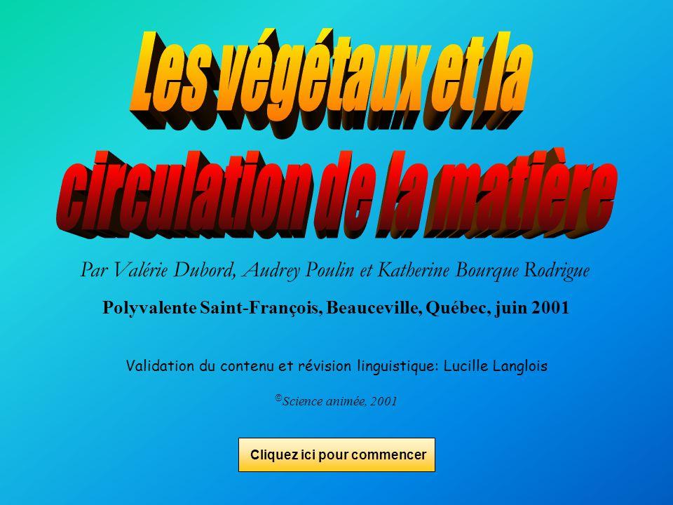 Les végétaux et la circulation de la matière Par: Valérie Dubord Audrey Poulin Katherine Bourque Rodrigue
