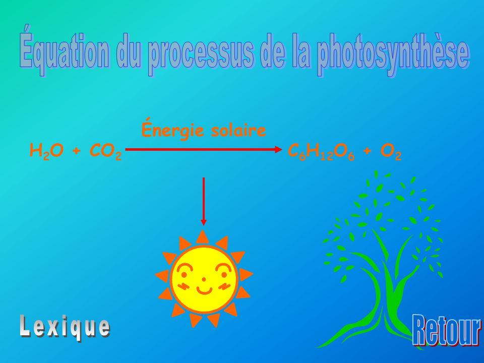 H 2 O + CO 2 C 6 H 12 O 6 + O 2 Énergie solaire