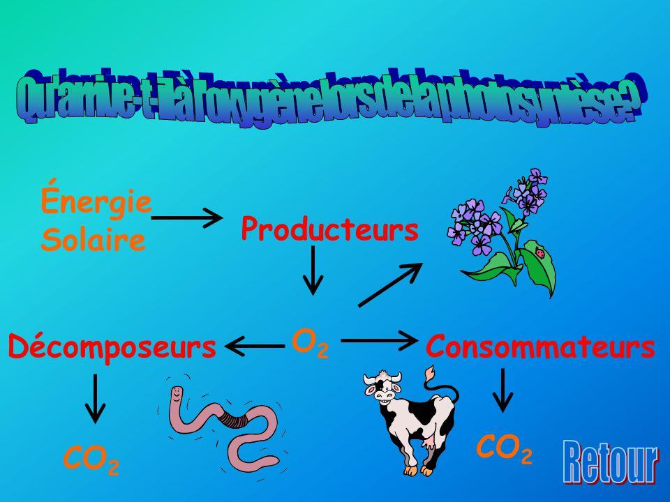 Énergie Solaire Producteurs O2O2 ConsommateursDécomposeurs CO 2