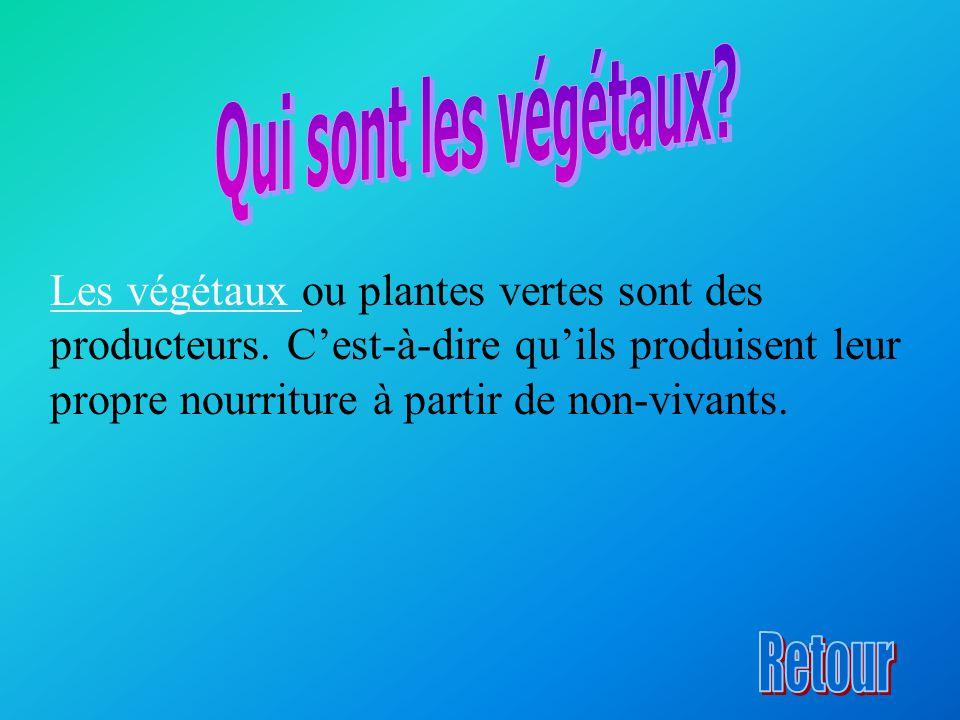 Les végétaux Les végétaux ou plantes vertes sont des producteurs. C'est-à-dire qu'ils produisent leur propre nourriture à partir de non-vivants.