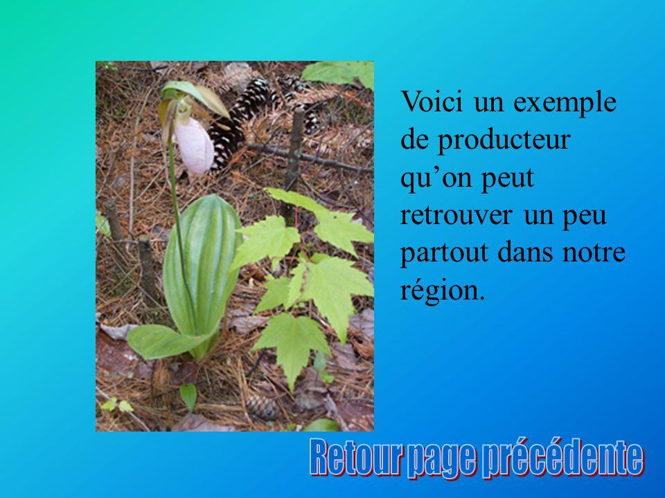 Les végétaux contiennent de la chlorophylle, pigment vert dans la feuille de la plante.