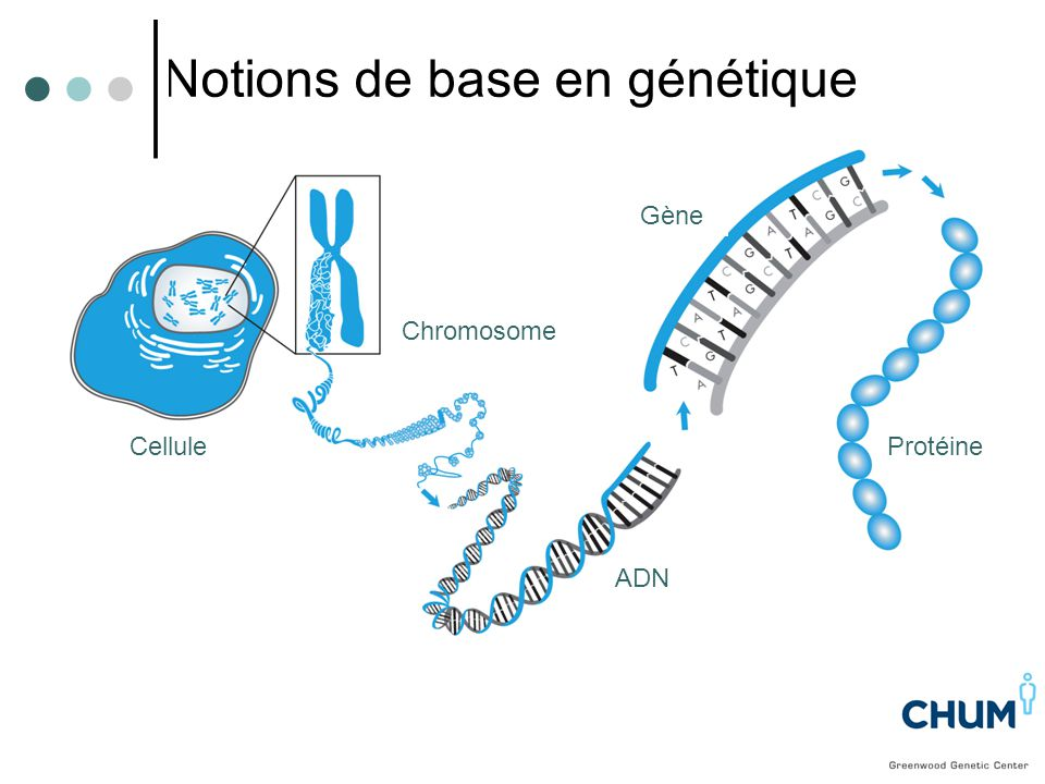 CANCER SPORADIQUE Deux mutations acquises Tumeur CANCER HÉRÉDITAIRE -Une mutation héritée - Une mutation acquise Tumeur Une mutation dans un gène peut être héritée ou acquise au cours de la vie d'une personne Donc tous les cancers sont génétiques mais pas nécessairement HÉRÉDITAIRES