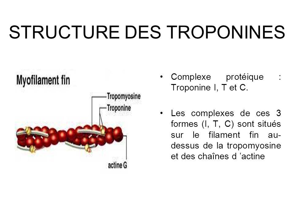 STRUCTURE DES TROPONINES Complexe protéique : Troponine I, T et C. Les complexes de ces 3 formes (I, T, C) sont situés sur le filament fin au- dessus